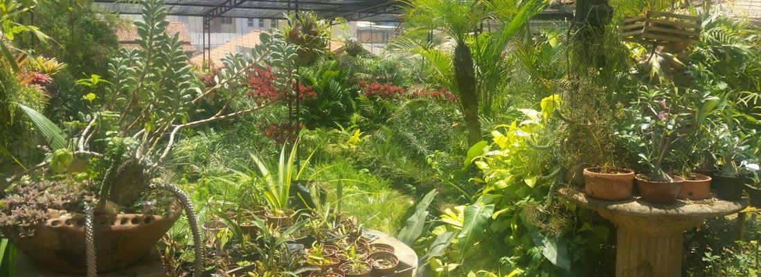 Floricultura-Fonte-Grande-Loja-1