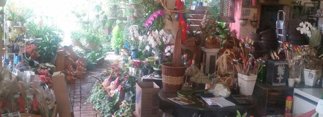 Floricultura-Fonte-Grande-Loja-3